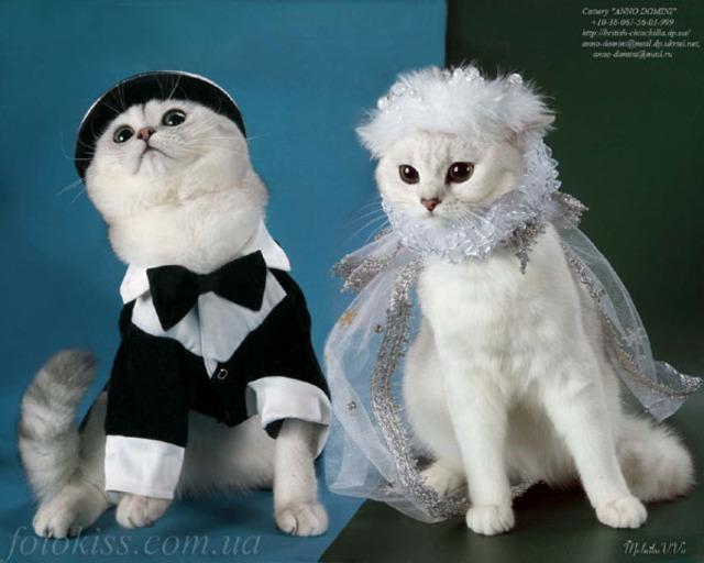 девушка застенчива, коты жених и невеста картинка необходимо
