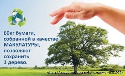 Сколько надо макулатуры чтобы сохранить одно дерево пункт приема макулатуры в таганроге цена