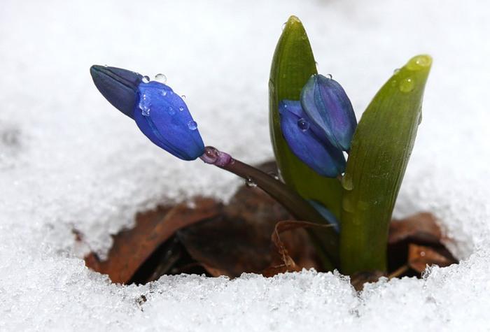 Где зима встречается с весной 0_23d5f_f65ed33a_XL (700x475, 60Kb)