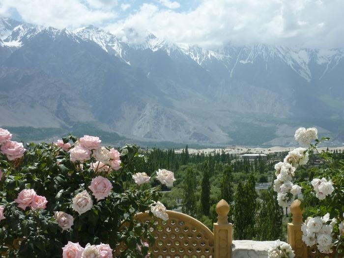 что так фото роза в горах могут
