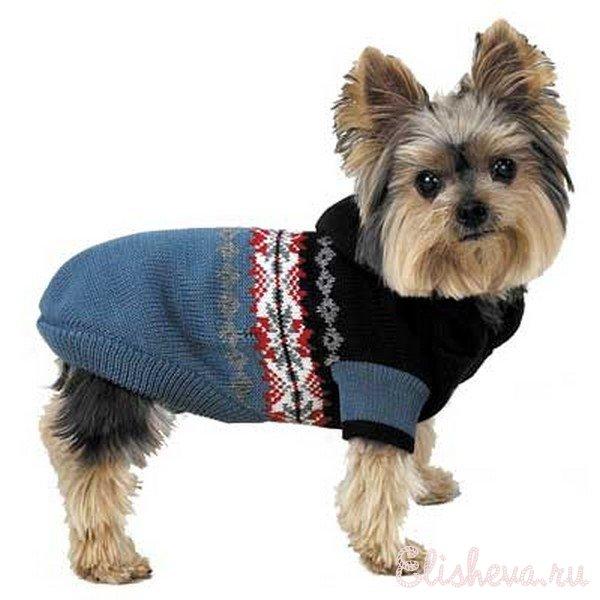 одежда выкройки для маленьких собак чихуахуа у выкройки