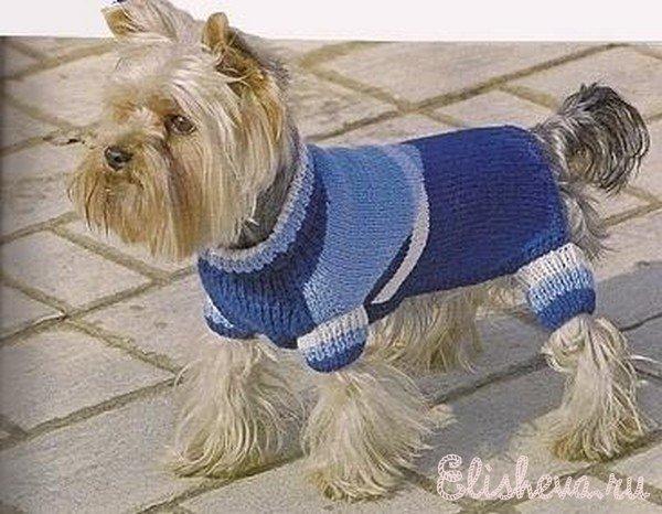 вязаная одежда для собак схемы