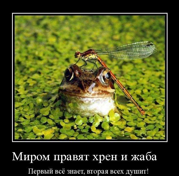 https://img1.liveinternet.ru/images/attach/c/10/110/2/110002609_9ruf01ff42e499bca004643436a1c290e03.jpg