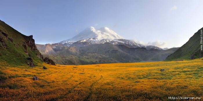 горные цветы кавказа фото и названия