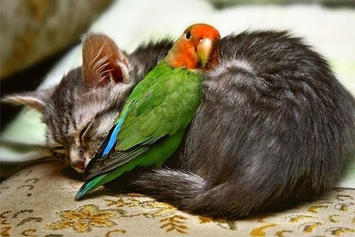 cute_animals_sleeping_pillows_21 (700x467, 258Kb)