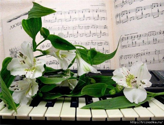 Цветы на клавишах рояля… в глазах две капельки росы…. Обсуждение ...