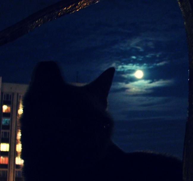 ночь кошка
