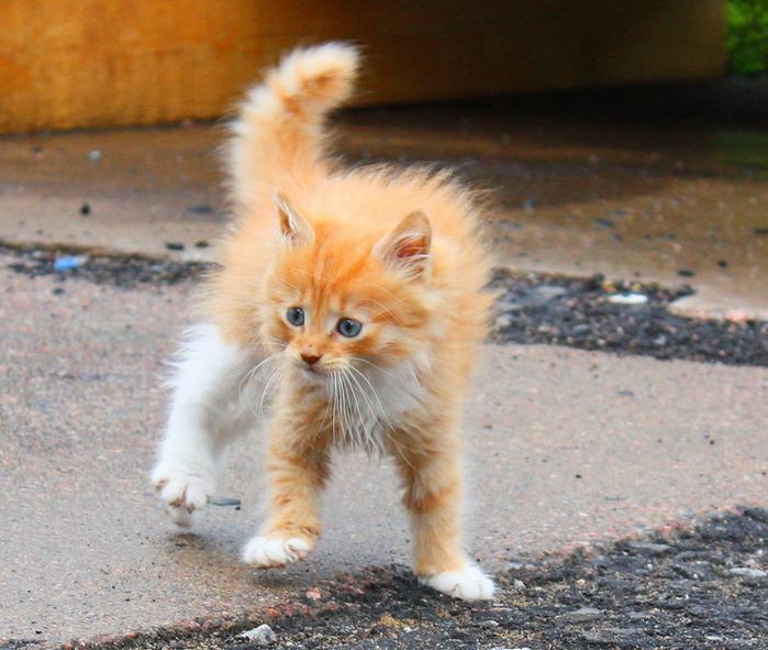 Смелый кот фото звонках практически