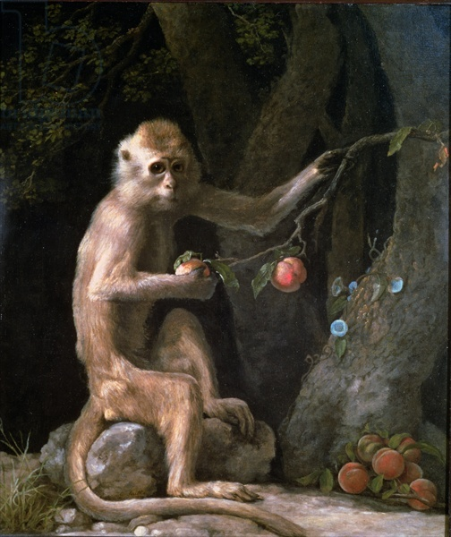 2097049_Stubbs_George_17241806__Portrait_of_a_Monkey_dated_1774__Oil_on_canvas_70_5x60_3_cm__Private_Collection (504x600, 124Kb)//2097049_Stubbs_George_17241806__Portrait_of_a_Monkey_dated_1774__Oil_on_canvas_70_5x60_3_cm__Private_Collection (504x600, 124Kb)