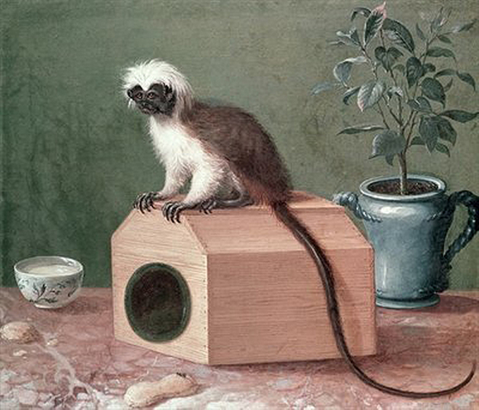 2097049_The_Favourite_Monkey_of_Carl_Linnaeus_170778_oil_on_canvas_by_Hesselius_Gustavus_16821755_Hammarby_Uppsala_Sweden (700x598, 277Kb)//2097049_The_Favourite_Monkey_of_Carl_Linnaeus_170778_oil_on_canvas_by_Hesselius_Gustavus_16821755_Hammarby_Uppsala_Sweden (700x598, 277Kb)