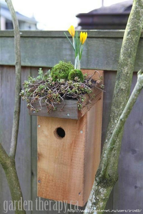 500x750x67-birdhouse.jpg.pagespeed.ic.5ycEyvnW29 (466x700, 223Kb)