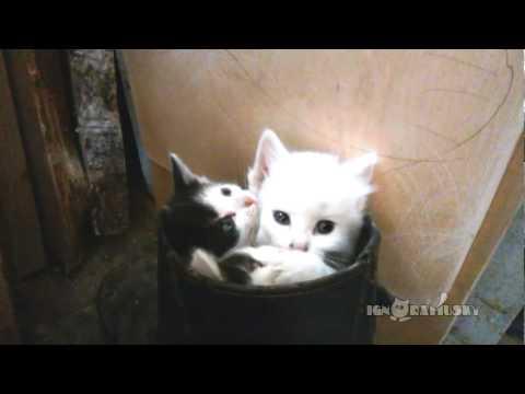 потягушки котята/3518263_hqdefault (480x360, 9Kb)