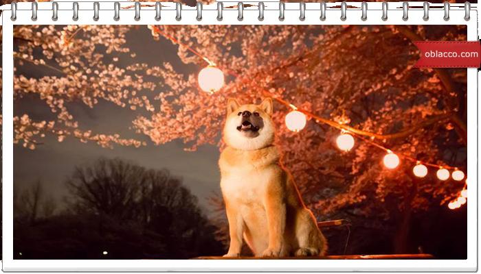 Самая счастливая в мире собака