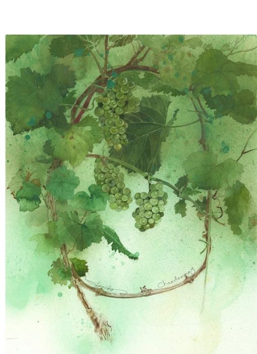 watercolor-art-048 (508x700, 243Kb)
