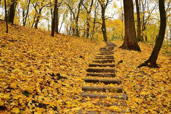Листья ступеньки осень скачать