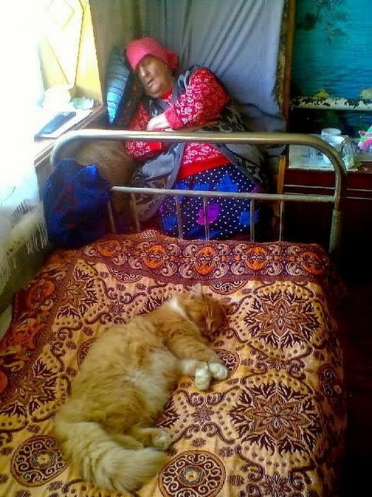 а ты дал выспаться своему коту