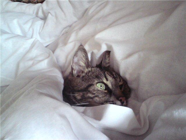 кошки постель