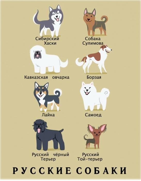 породы собак в картинках