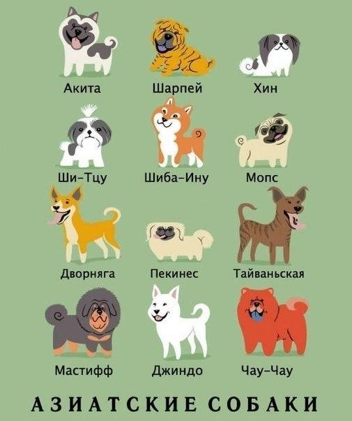 Рисунки: породы и происхождение пород собак