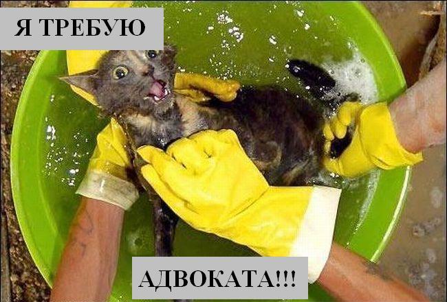 помыл кота видео