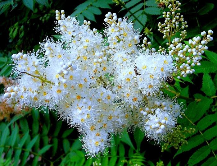 Селен распустившийся цветок