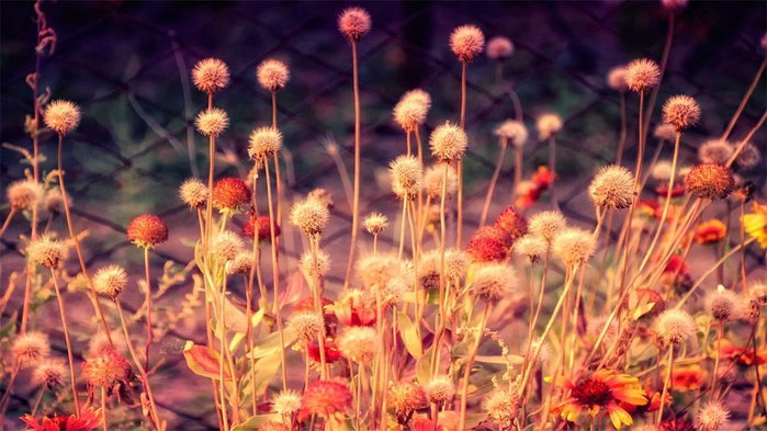 1365787-facebook-cover-photos-nature-flowers (700x393, 74Kb)