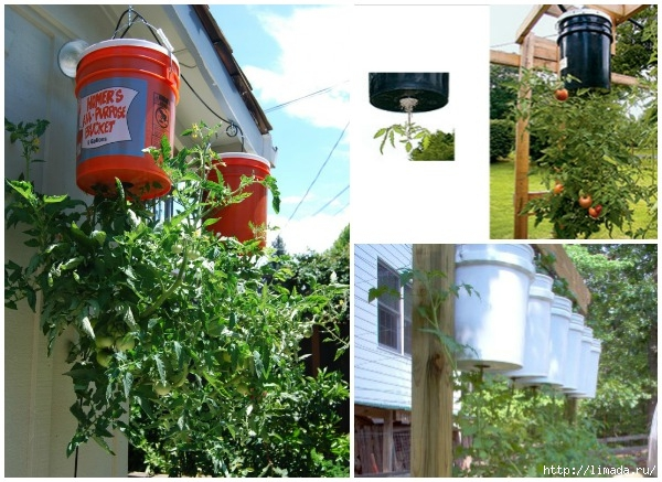 How-to-Grow-Tomatoes-Upside-Down-DIY-Upside-down-tomaton-planter (600x437, 231Kb)