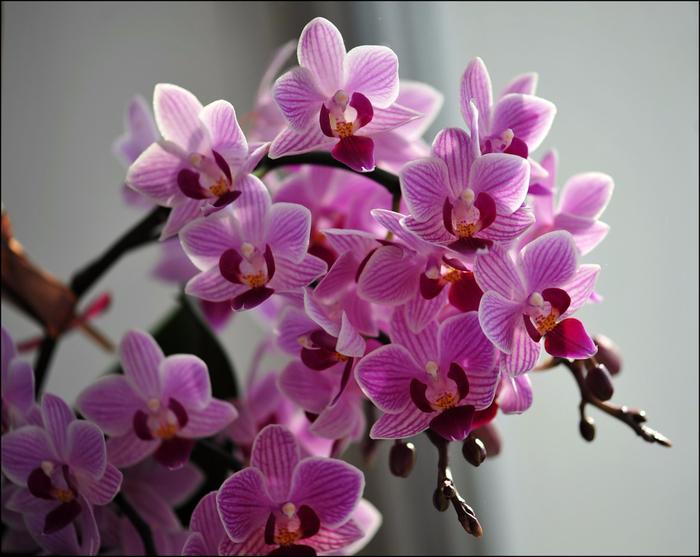 Орхидеи картинка с днем рождения