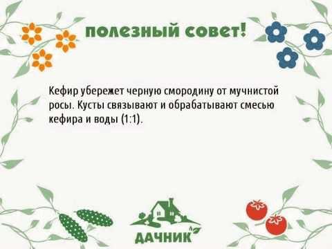 https://img1.liveinternet.ru/images/attach/c/11/128/714/128714901_3621707_sovet_32.jpg
