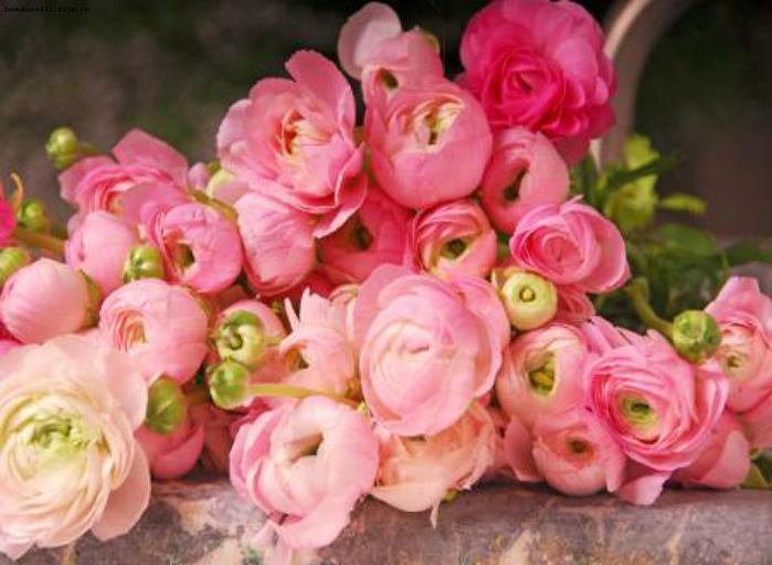 Открытка с днем рождения женщине пионовидные розы с пожеланиями, луизы сайто поздравления