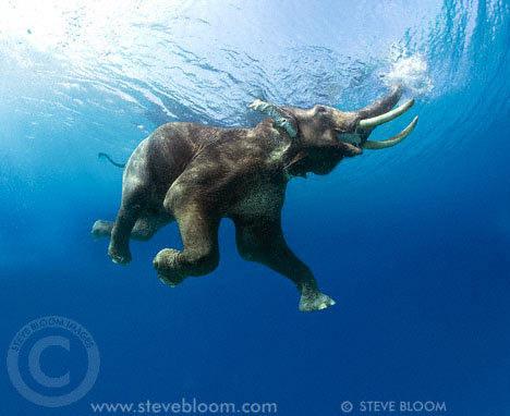 фото слон