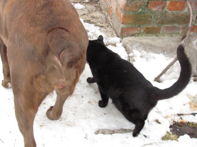 Мои коты)))
