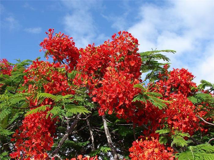 Цветы востока фото гранита зачастую