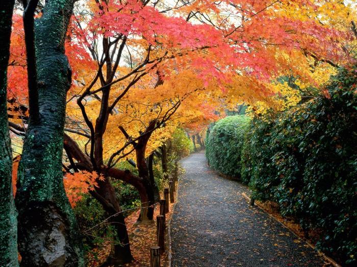 Золотая осень (19 фото)