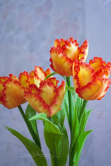 Тюльпаны. Обсуждение на LiveInternet - Российский Сервис Онлайн-Дневников