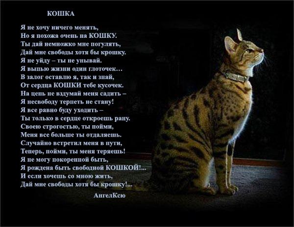 Стихи про кошку и ее человека