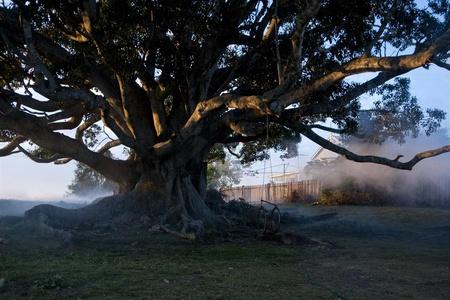 Дерево (The Tree) Германия, Франция, Италия, Австралия...