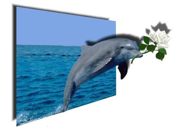 Дельфины открытки гифки