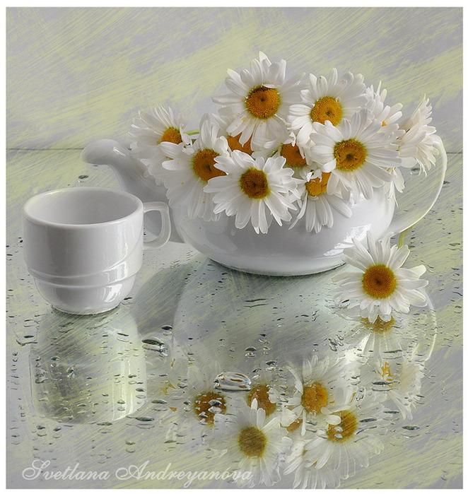Доброе утро очень красивые картинки с ромашками