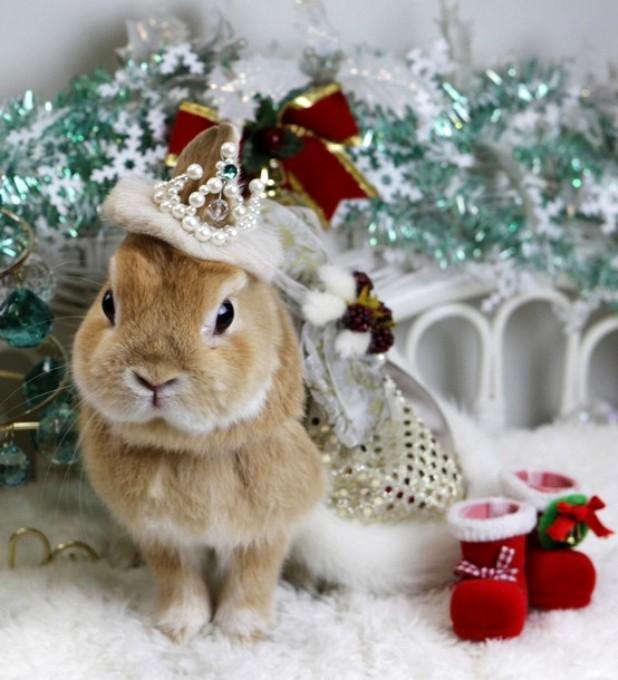 как кролик новый год картинка словом, этих местах