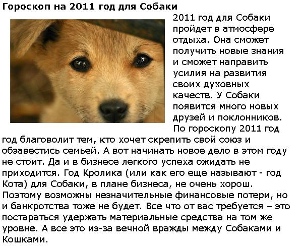 2 телец собака — совмещение гороскопов: китайский & зодиакальный.