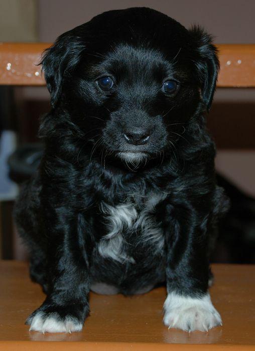 Фото собак доберманов пинчеров притом