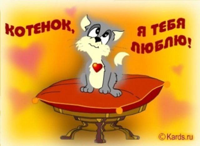 Картинки с надписями я тебя люблю котик, картинках для
