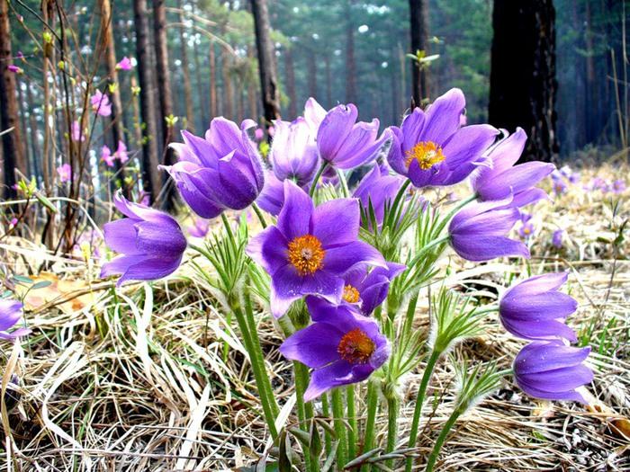 Весенние цветы в лесу названия