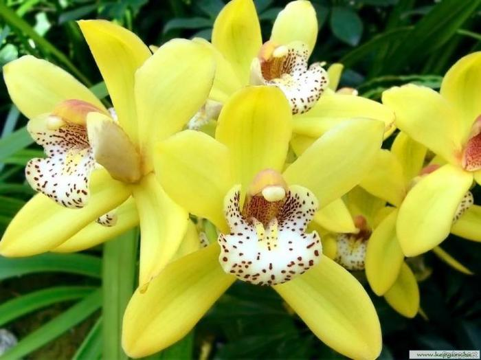 Картинка Орхидеи для рабочего стола сжата...