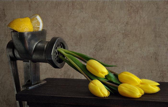 Картинки про тюльпаны прикольные