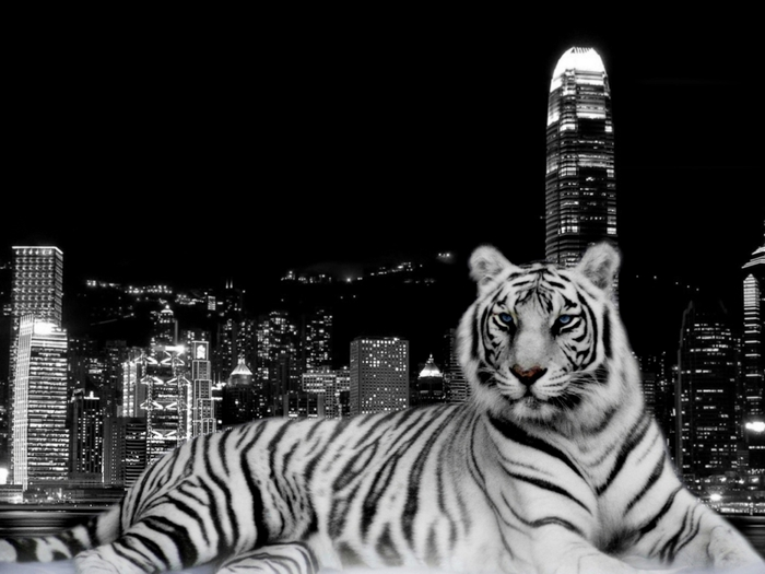 4029600_u12032_5857_1024_Tiger_and_the_City (700x525, 160Kb)