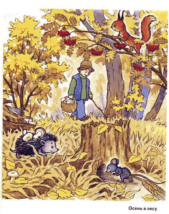 Надписями, осень в лесу картинки для детей в детском