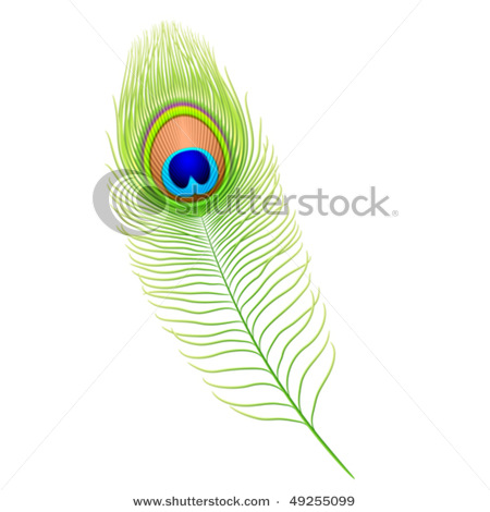 stock-vector-peacock-feather-detailed-vector-49255099 (450x470, 46Kb)