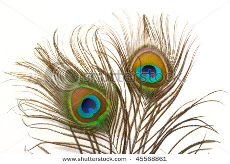 stock-photo-peacock-plume-close-up-45568861 (450x320, 79Kb)